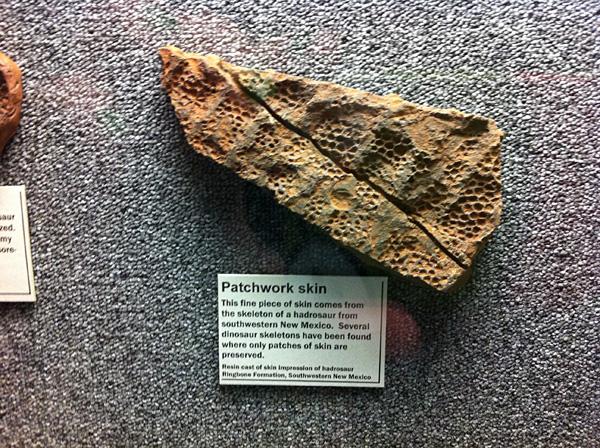 Hadrosaur skin