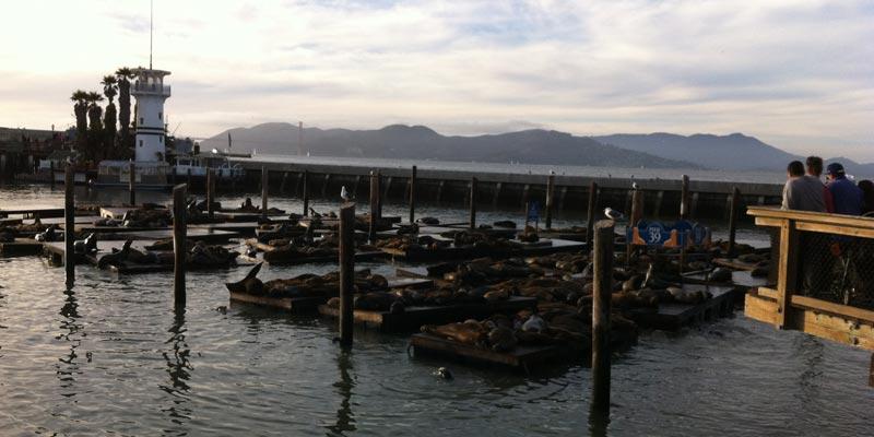 Pier 39, Sea lions
