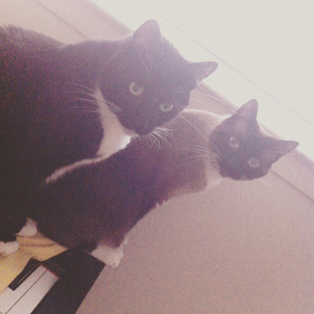 helios and eos cats